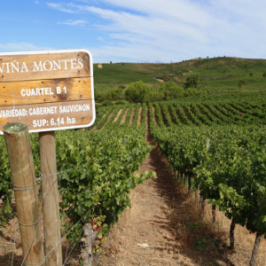 Montes Chile