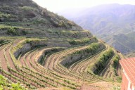 Tsiakkas Winery Zypern
