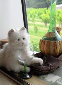 The Cenosilicaphobic Cat