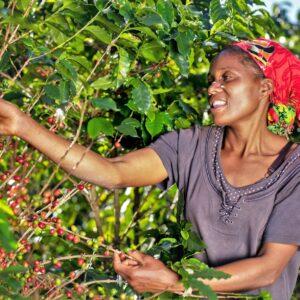 Am Nespresso Reviving Origins Projekt teilnehmende Kaffeebauern in Simbabwe.
